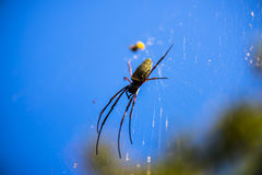 Spider on a spider web. With natural background Stock Photo