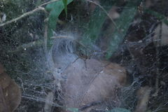 Spider on a spider web. Night image of very dreadful spider on his net in the darkness Royalty Free Stock Photography