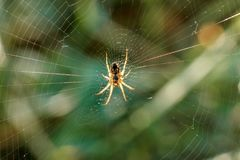 Spider on a spider web. On a blurred background of a green grass close-up Royalty Free Stock Photos