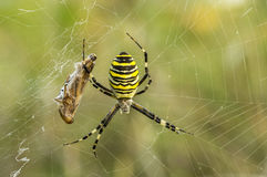 Spider. S Latin Araneae, Aranei, ancient Greek ἀράχνη.. - A detachment of arthropods, the second most well-known representatives of the class of arachnids Stock Image