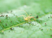 Spider. S are looking for their prey on the leaves Stock Image