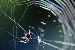 Spider on spiderweb Royalty Free Stock Photos