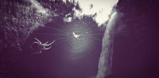 Spider on spiderweb. Close up of spider on spiderweb Stock Photo