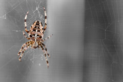 Spider spinning in black Stock Photo