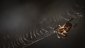 A spider spinning his web Royalty Free Stock Images