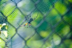 Spider spinning its web