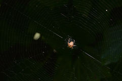 Spider spinning its web Stock Photos
