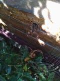 Spider. Паук. stock images