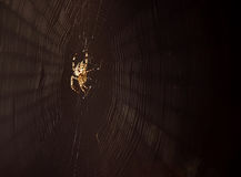 Spider spinning web. Closeup of spider spinning web, isolated on black background Royalty Free Stock Photos