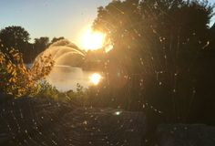 Spider spinning a web. Autumn landscape, city fountain in Park, sunset and positive mood. The web with flies, glows in sunlight. Spider spinning a web. Sunny Stock Photos