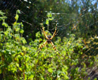 A spider spinning a web Stock Images