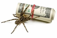 Spider stand guard of cash isolated on white Royalty Free Stock Photos