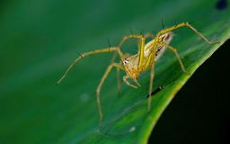 Spider standing on leaves Stock Photos