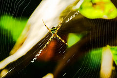 Spider standing on the spiderweb Stock Photography