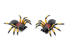 Spider stock images Royalty Free Stock Photography