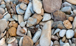 Spider on stone Royalty Free Stock Images
