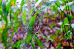 A spider after a storm. Khaoyai Thailand Stock Photo