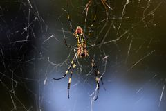 Spider. A spider stretches the net in the trees of the forest and is waiting for the prey stock photo
