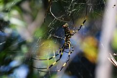 Spider. A spider stretches the net in the trees of the forest and is waiting for the prey royalty free stock photo