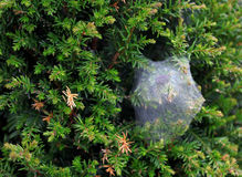 The spider strong web on the bush Stock Photo