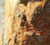 Stubborn spider. Spider is so stubborn for completion of its task Stock Photography
