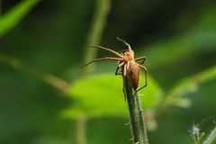Spider sunbathing Royalty Free Stock Photography