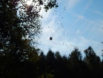 A spider tangling sky stock photos