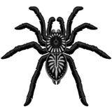 Spider Tarantula Tattoo Style Black and White royalty free illustration