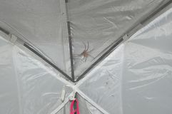 Spider on a tent Stock Photos
