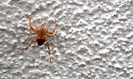 Spider on a textured wall. Close up of a spider on a bumpy textured white wall Royalty Free Stock Photography