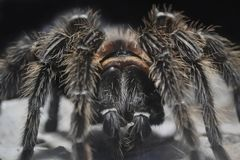 Spider royalty free stock photography