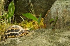 Spider Tortoise Royalty Free Stock Photos