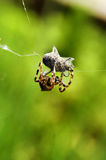 Spider trap. Spider at work with victim royalty free stock photo