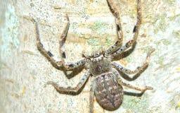 Spider on tree Stock Image