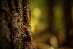 Spider on a tree Royalty Free Stock Photography