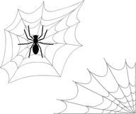 Spider and two types of cobweb. Vector illustration Royalty Free Stock Image