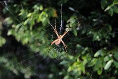 Spider Waiting Stock Photo