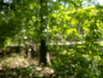 Spider waiting center of web. For hunting insects royalty free stock images