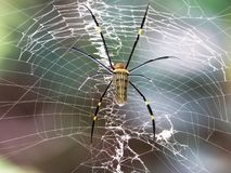 Spider waiting with his web. This spider was waiting with his web ready for his breakfast stock photography