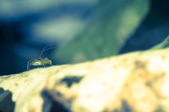 A spider is waiting royalty free stock images