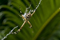 Spider waiting for some prey Stock Images