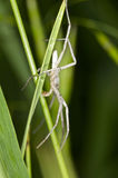Spider walking away on green.  Stock Image