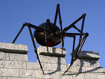 Spider on the wall. Giant black spider on the wall Stock Photos