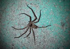Spider on the wall royalty free stock image