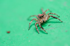 Spider in wall nature background Royalty Free Stock Photography