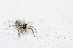 Spider in wall nature background Stock Photos
