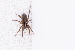 Spider on the wall Stock Photos