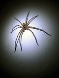 Spider on the wall with spotlight. Spider was lighting in the dark. It look very dangerous and silent surrounding Royalty Free Stock Photos