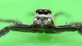 Spider. Wat Pa Sawang Bun Thailand Royalty Free Stock Photo