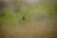 Spider Royalty Free Stock Images